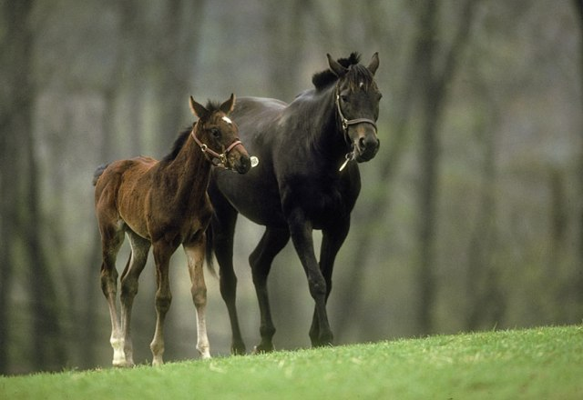 In Maryland, which has more horses per square mile than any state in the nation, horse farms represent a quarter of its agricultural land. (Photo by Dave Harp)