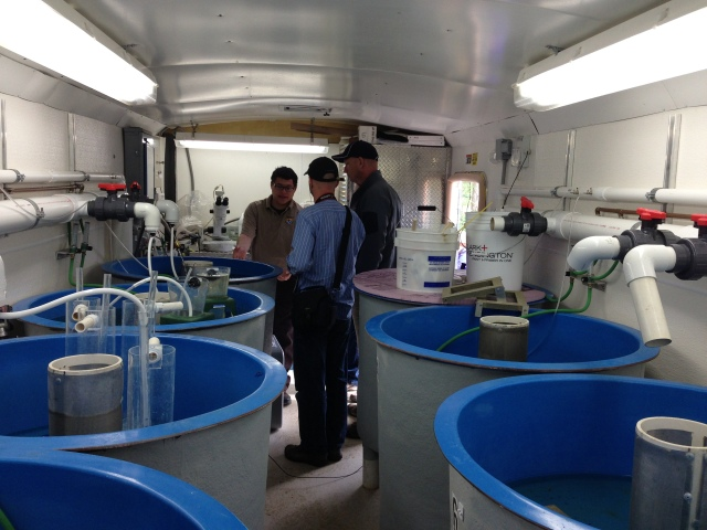 Fellows observe the trailer at the Streamside Sturgeon Rearing Facility in New Richmond, where a mere 11 eggs are currently housed, but where staff is working to restore Great Lake Sturgeon to the stream. (Photo IJNR)