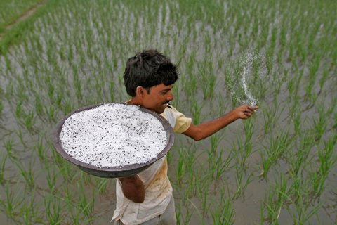 A farmer sprinkling pesticide in his paddy field in Visalpur village on the outskirts of Ahmedabad, Gujarat, on July 30, 2012. (Photo by Amit Dave/Reuters)