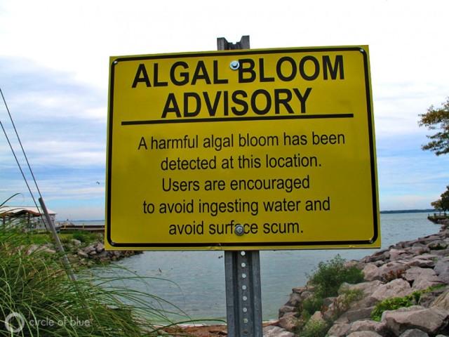 Yeager-Kozacek_Sea Grant_algae