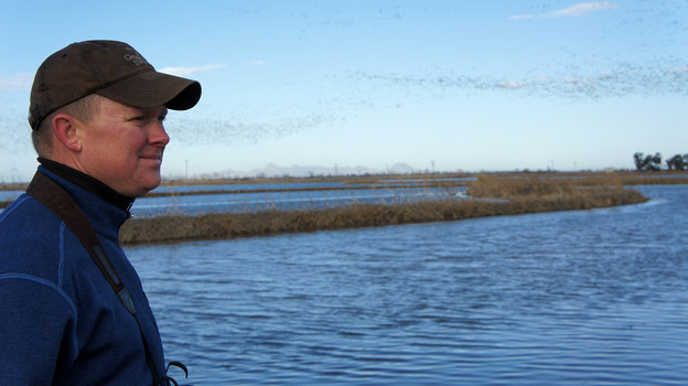 Rice farmer Douglas Thomas watches snow geese take flight over his rice fields in California's Central Valley. (Photo by Lauren Sommer/KQED)
